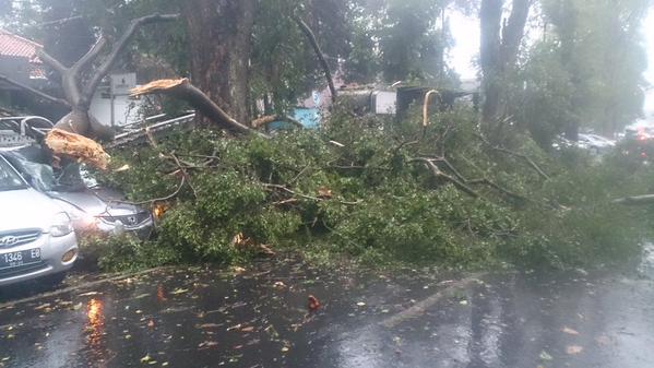 Pohon tumbang Hujan