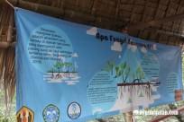 Hutan Mangrove Jembatan Cinta Batu Karas Pangandaran (9)