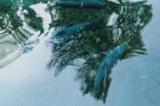 Objek Wisata Cibulan Kuningan (49)