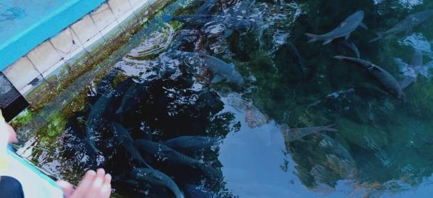 Objek Wisata Cibulan Kuningan (8)
